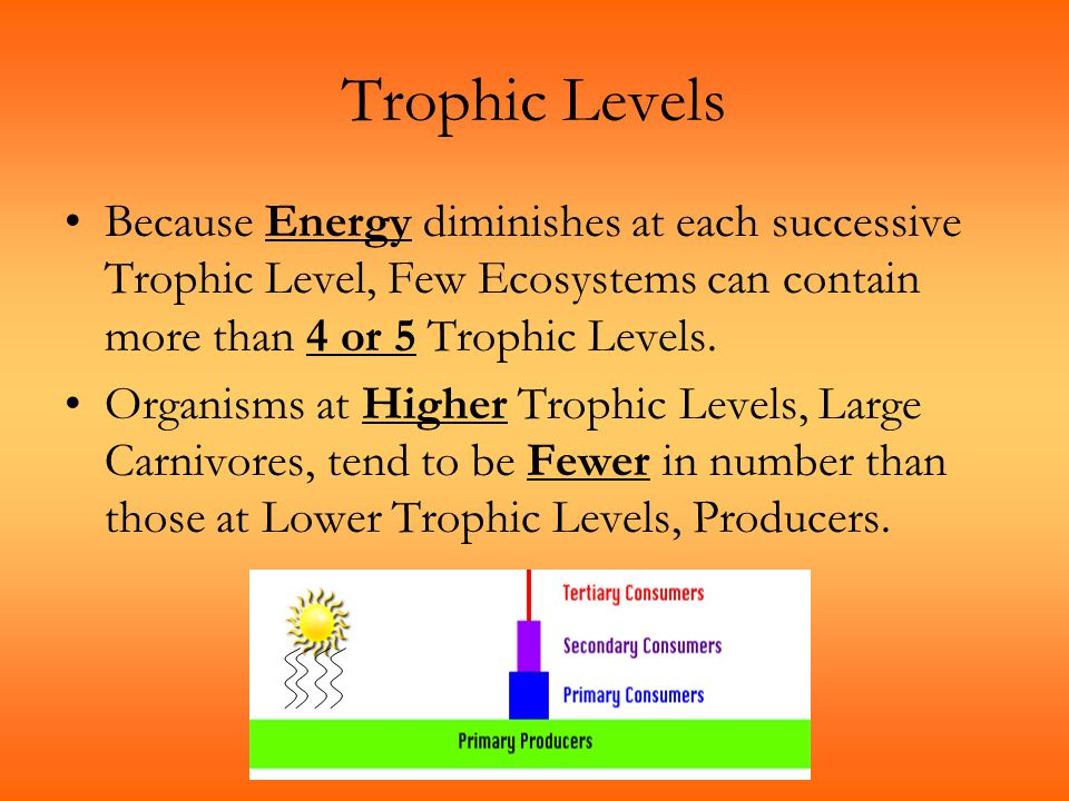 Trophic Levels Because Energy diminishes at each successive Trophic Level, Few Ecosystems can contain more than 4 or 5 Trophic Levels.