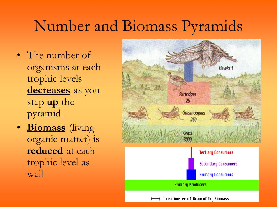 Number and Biomass Pyramids