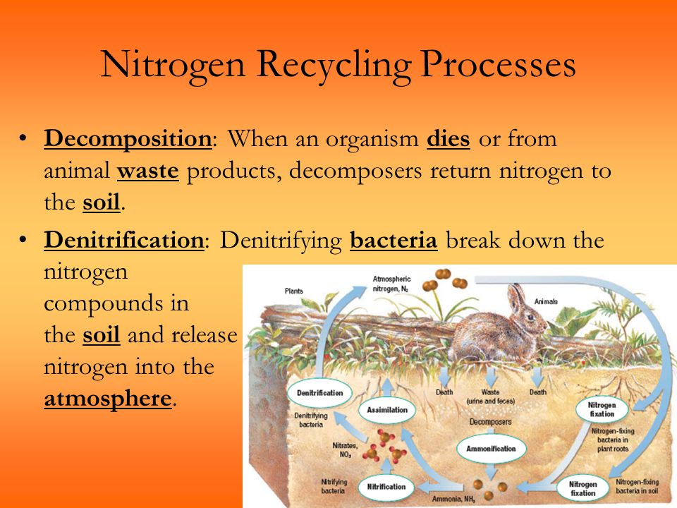 Nitrogen Recycling Processes