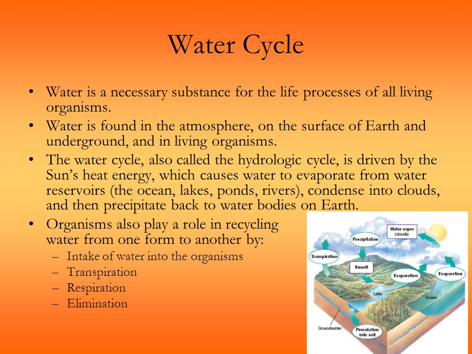 Water Cycle Water is a necessary substance for the life processes of all living organisms.