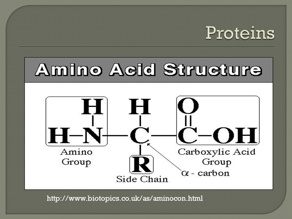 Proteins http://www.biotopics.co.uk/as/aminocon.html