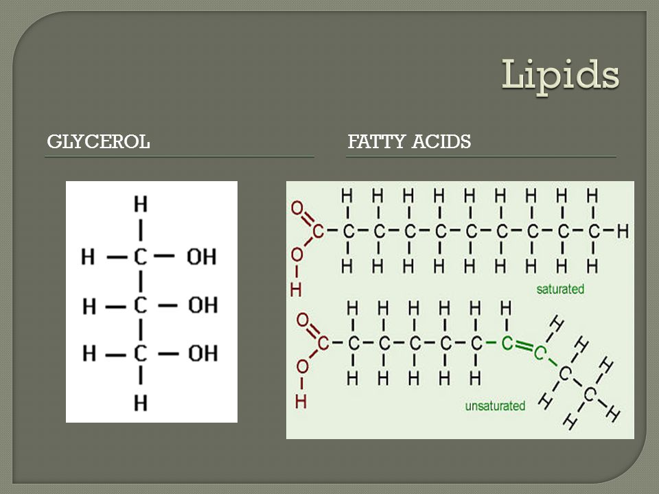Lipids Glycerol Fatty Acids
