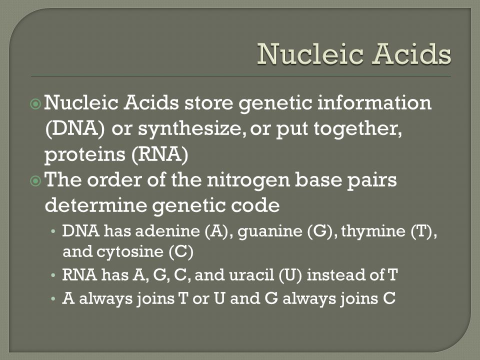 Nucleic Acids Nucleic Acids store genetic information (DNA) or synthesize, or put together, proteins (RNA)
