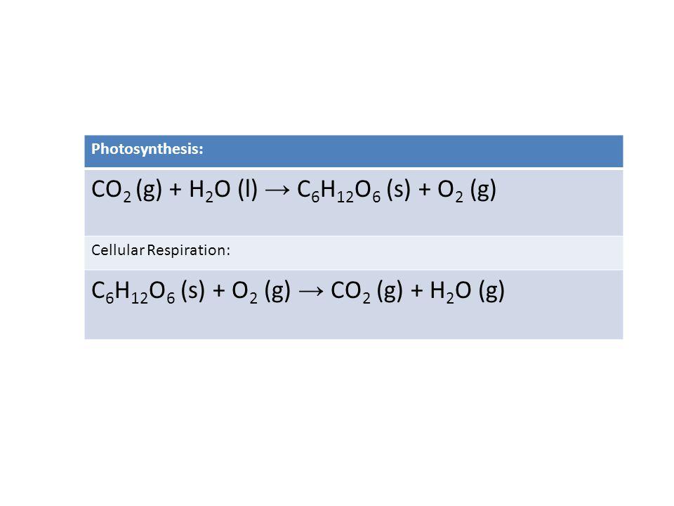 CO2 (g) + H2O (l) → C6H12O6 (s) + O2 (g)