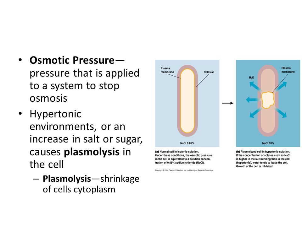 Osmotic Pressure—pressure that is applied to a system to stop osmosis