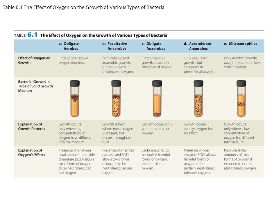 Table 6.1 The Effect of Oxygen on the Growth of Various Types of Bacteria