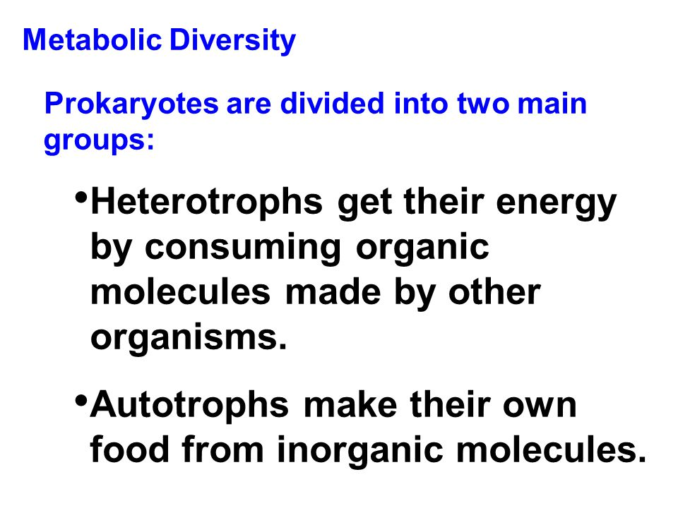 Autotrophs make their own food from inorganic molecules.