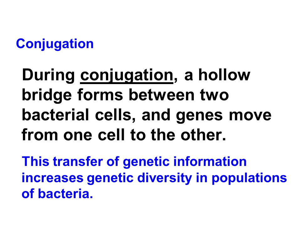 Conjugation During conjugation, a hollow bridge forms between two bacterial cells, and genes move from one cell to the other.