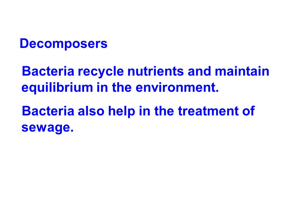 Decomposers Bacteria recycle nutrients and maintain equilibrium in the environment.