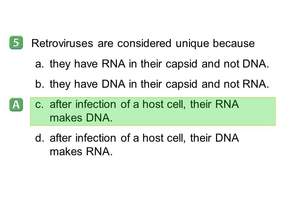 Retroviruses are considered unique because