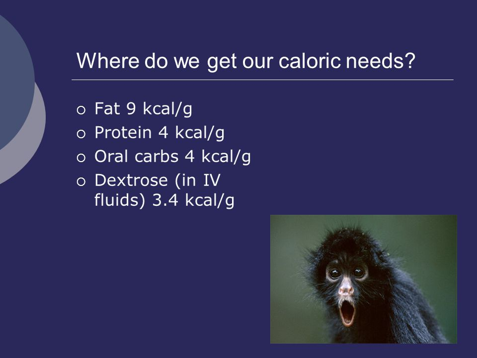 Where do we get our caloric needs