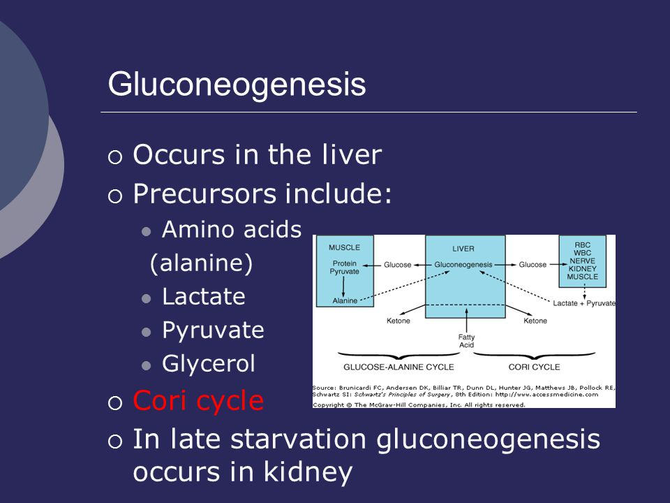 Gluconeogenesis Occurs in the liver Precursors include: Cori cycle