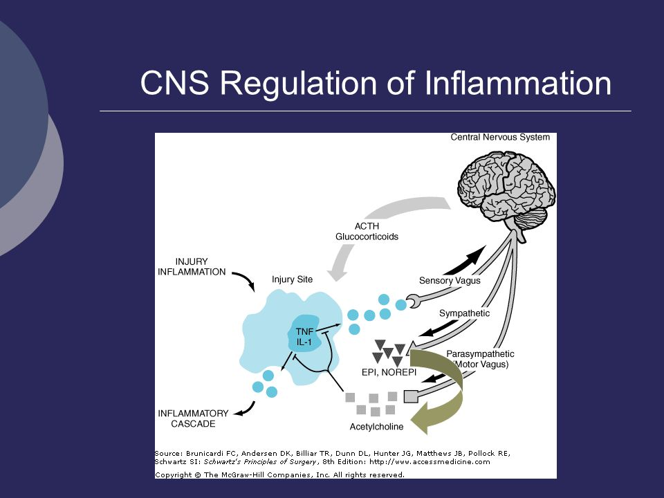 CNS Regulation of Inflammation