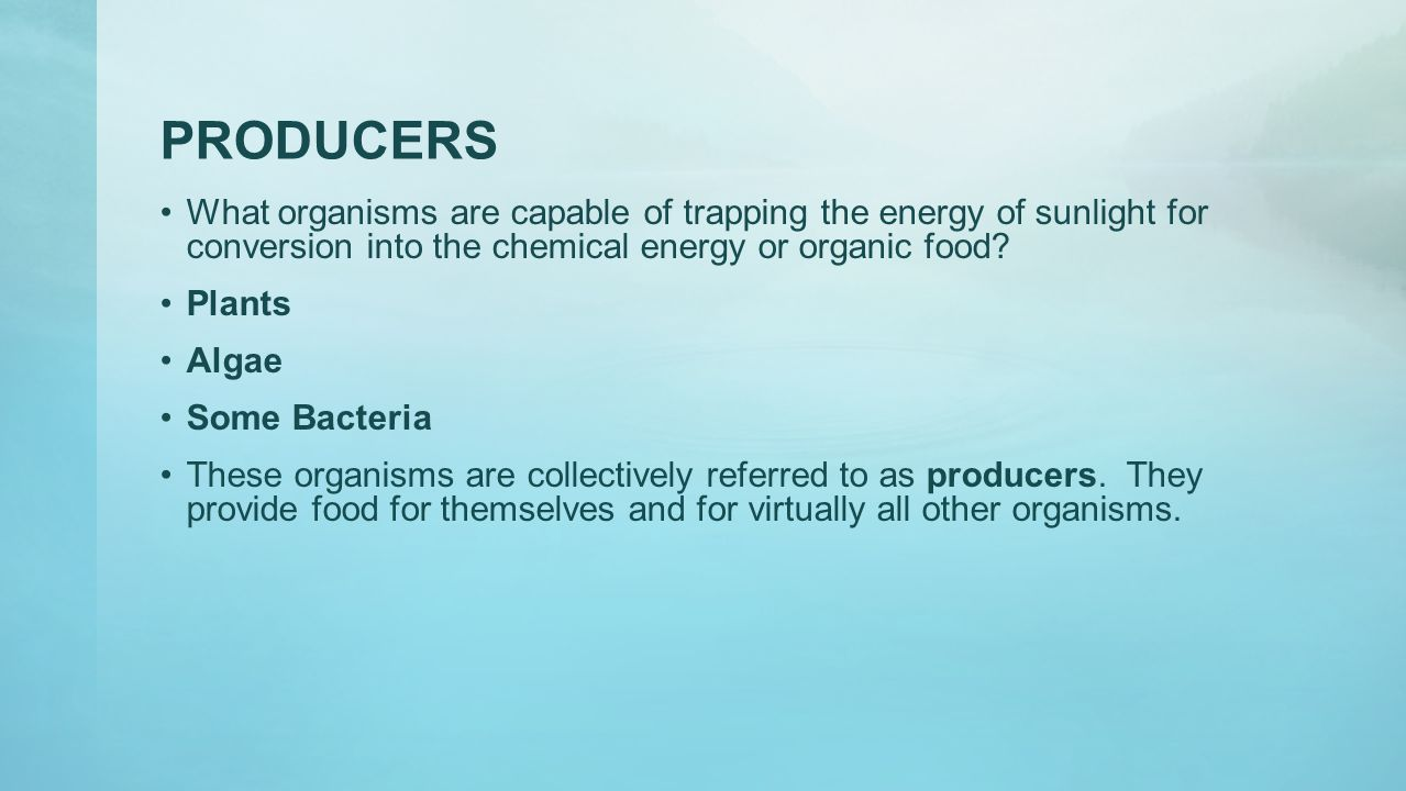 PRODUCERS What organisms are capable of trapping the energy of sunlight for conversion into the chemical energy or organic food
