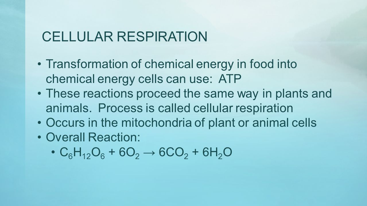 CELLULAR RESPIRATION Transformation of chemical energy in food into chemical energy cells can use: ATP.