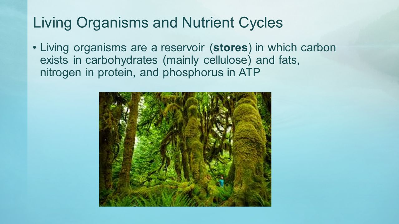 Living Organisms and Nutrient Cycles