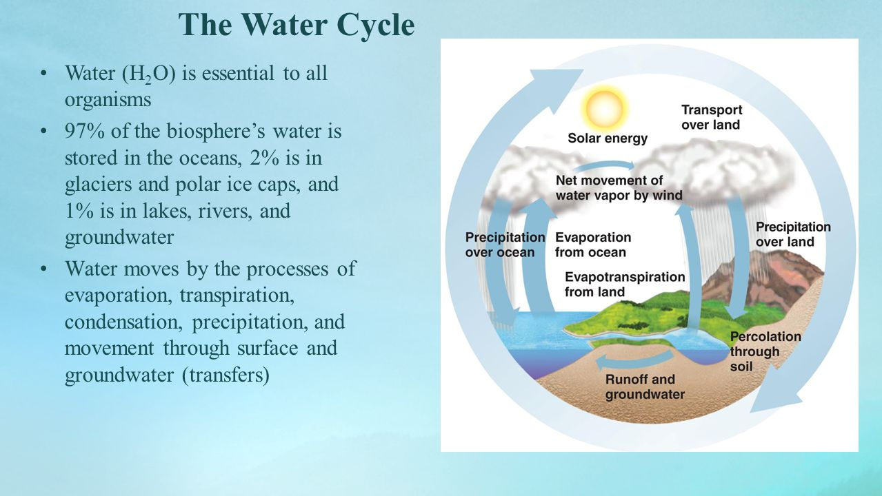The Water Cycle Water (H2O) is essential to all organisms