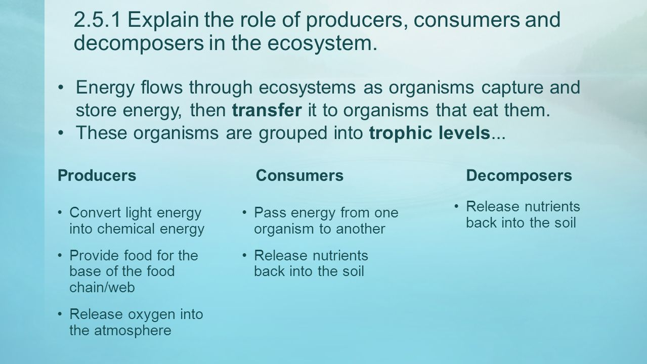 2.5.1 Explain the role of producers, consumers and decomposers in the ecosystem.