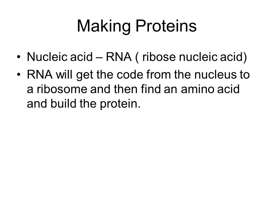 Making Proteins Nucleic acid – RNA ( ribose nucleic acid)