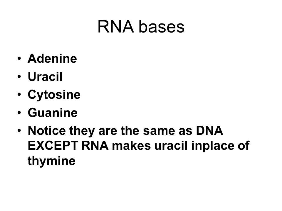 RNA bases Adenine Uracil Cytosine Guanine