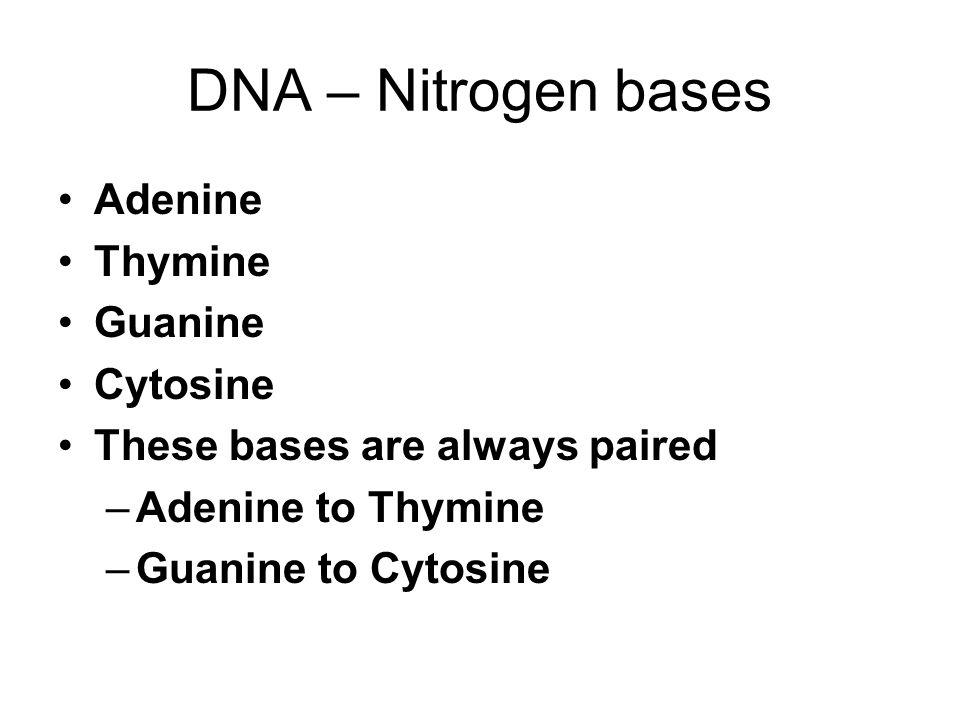DNA – Nitrogen bases Adenine Thymine Guanine Cytosine