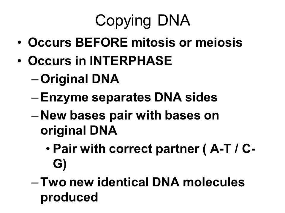 Copying DNA Occurs BEFORE mitosis or meiosis Occurs in INTERPHASE