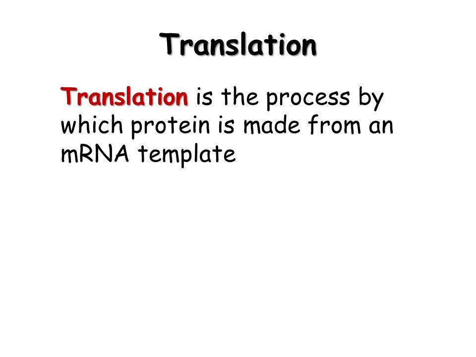 Translation Translation is the process by which protein is made from an mRNA template