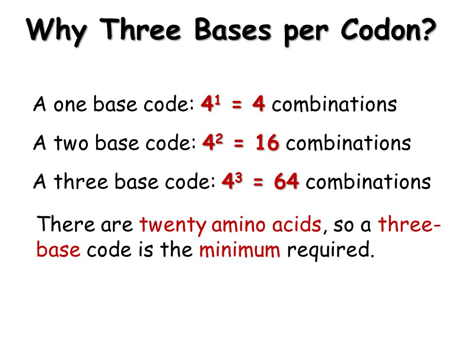 Why Three Bases per Codon