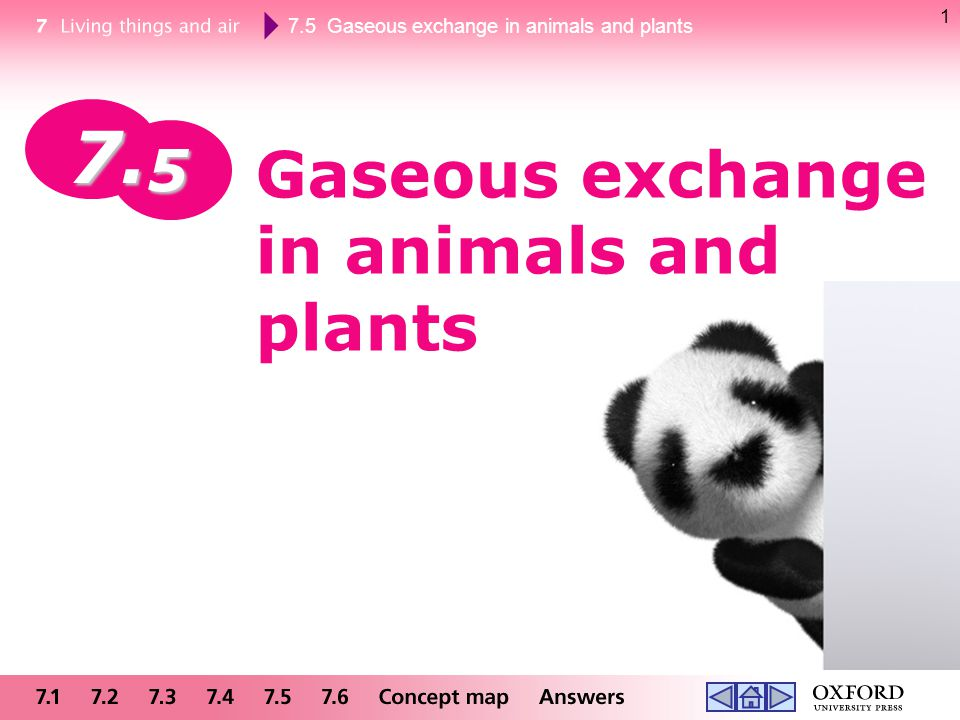 Gaseous exchange in animals and plants