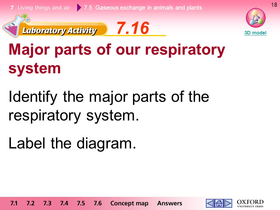 7.16 Major parts of our respiratory system