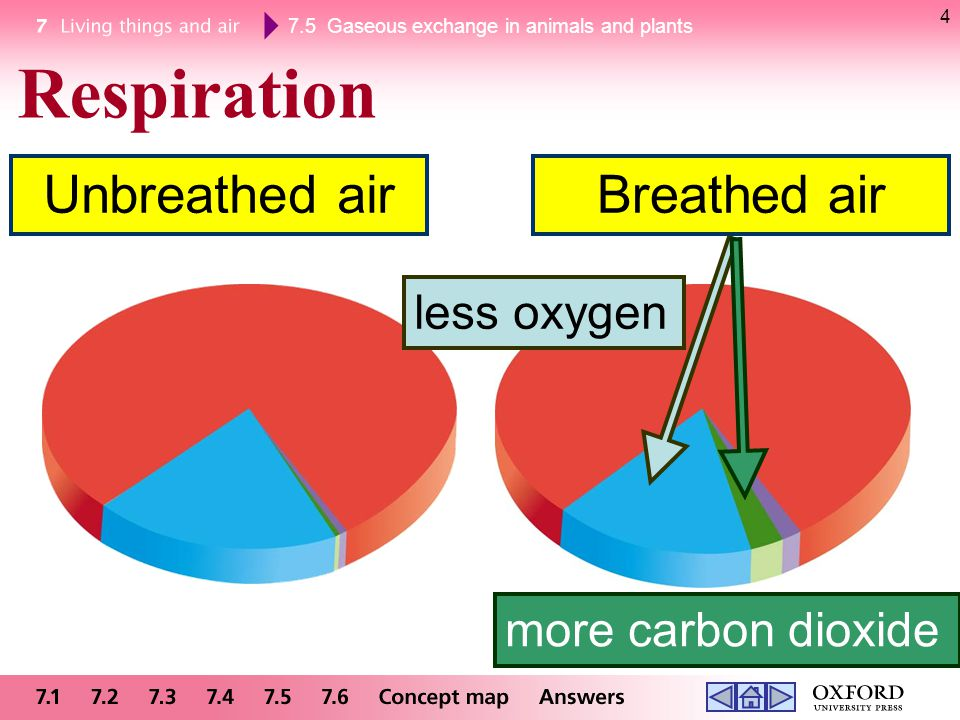 Respiration Unbreathed air Breathed air less oxygen