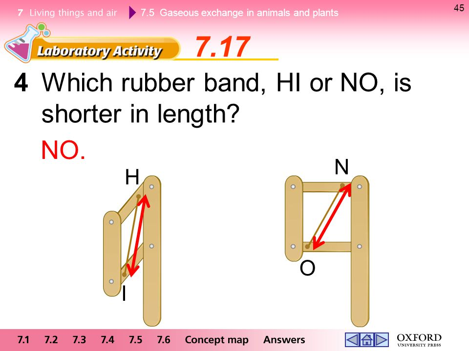 7.17 4 Which rubber band, HI or NO, is shorter in length NO. N H O I