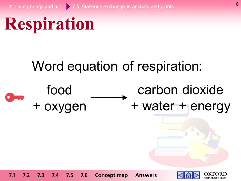 Respiration Word equation of respiration: food carbon dioxide + oxygen