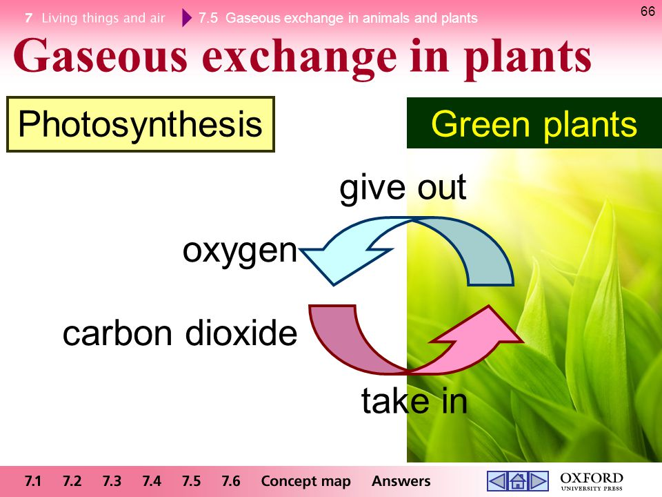 Gaseous exchange in plants
