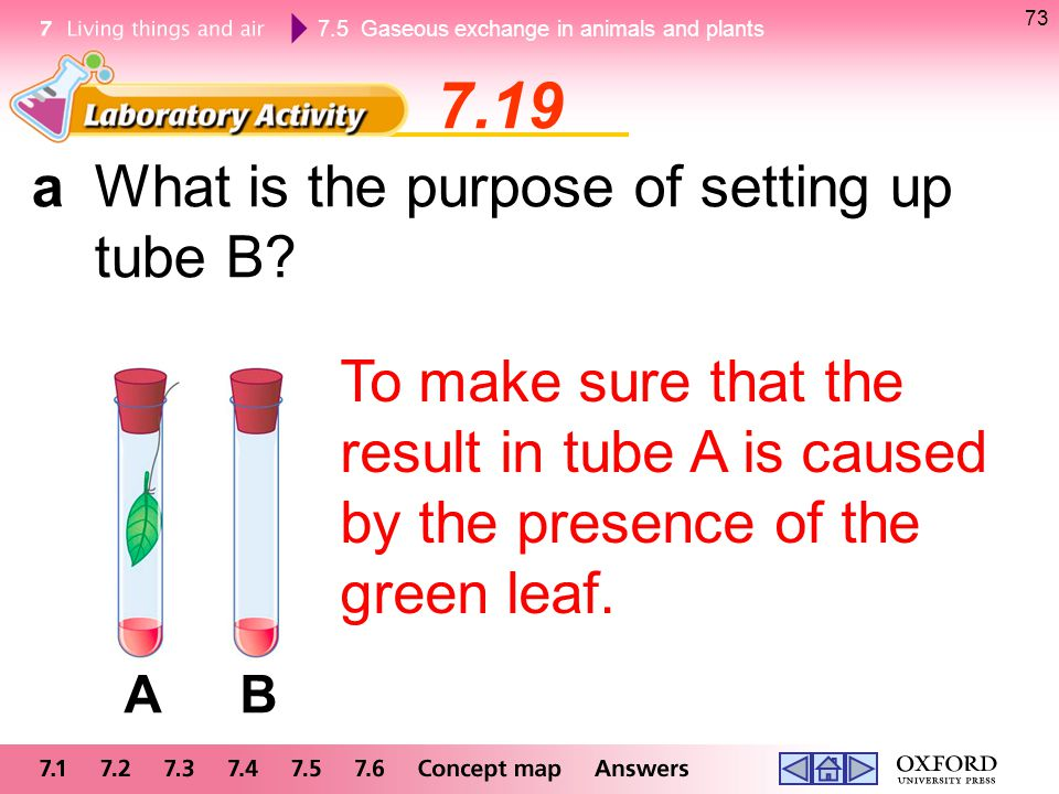 7.19 a What is the purpose of setting up tube B