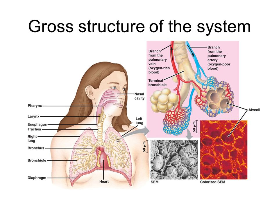 Gross structure of the system