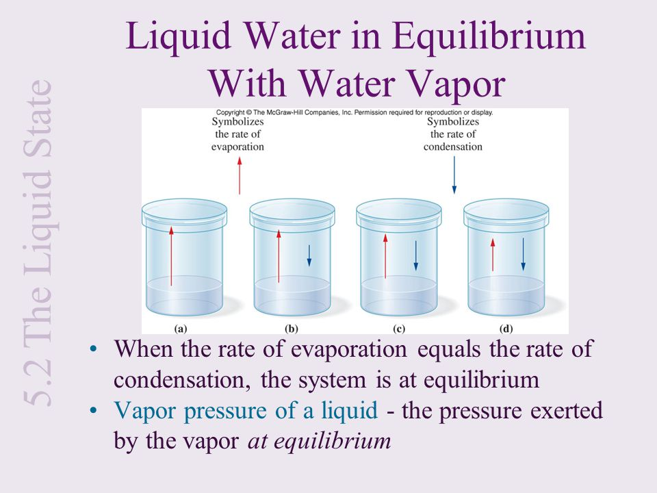 Liquid Water in Equilibrium With Water Vapor