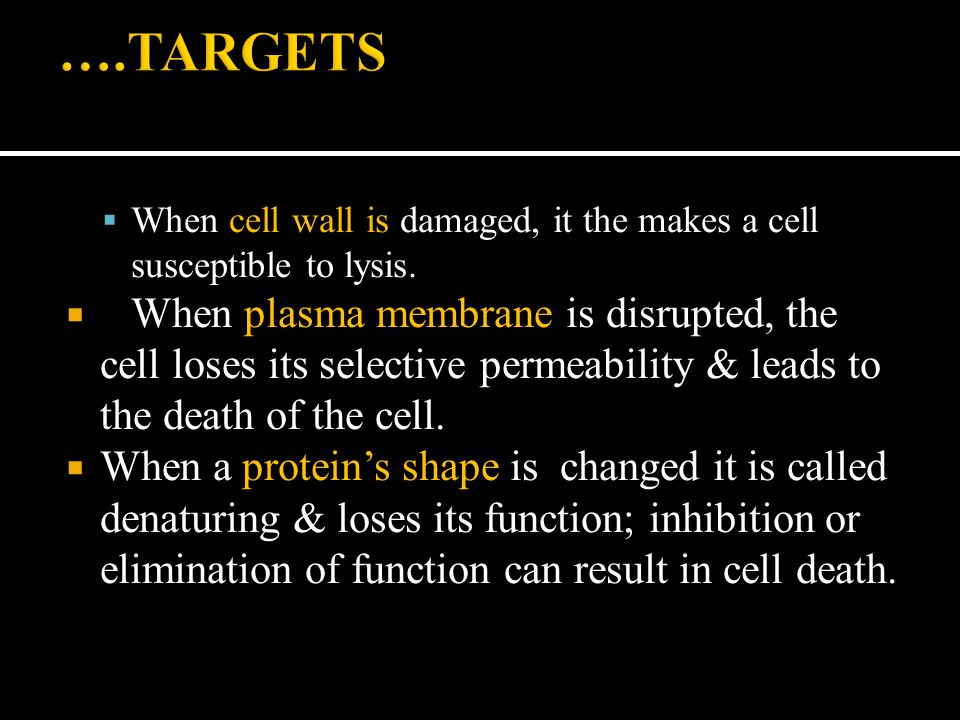 ….TARGETS When cell wall is damaged, it the makes a cell susceptible to lysis.
