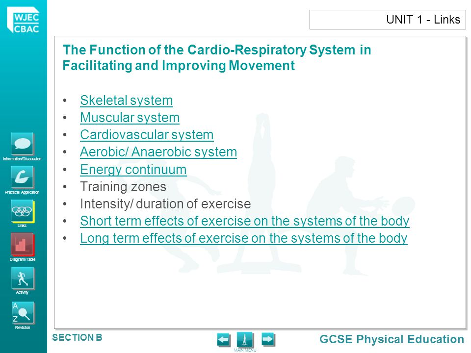 Cardiovascular system Aerobic/ Anaerobic system Energy continuum