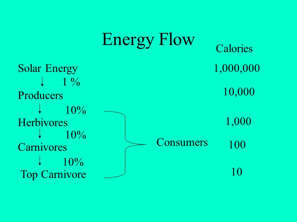 Energy Flow Calories Solar Energy 1,000,000 1 % 10,000 Producers 10%