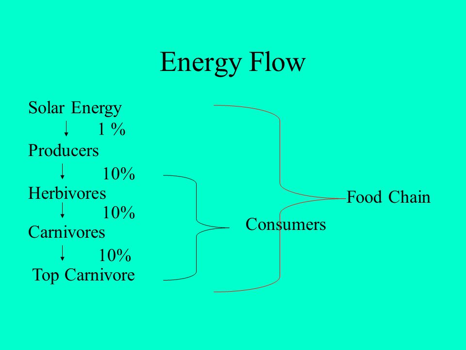Energy Flow Solar Energy 1 % Producers 10% Herbivores Food Chain 10%