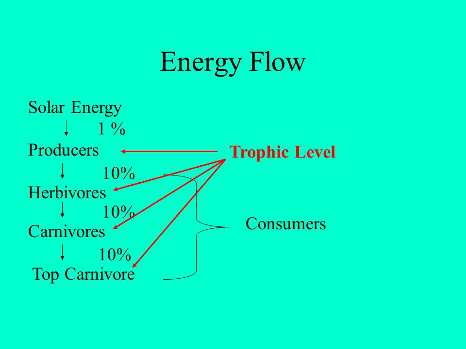 Energy Flow Solar Energy 1 % Producers Trophic Level 10% Herbivores
