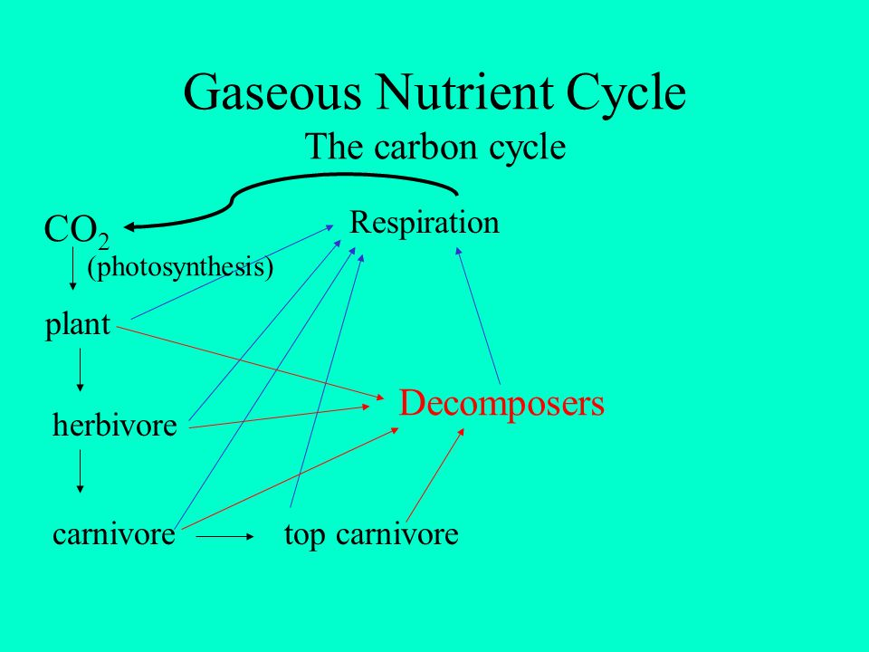 Gaseous Nutrient Cycle The carbon cycle
