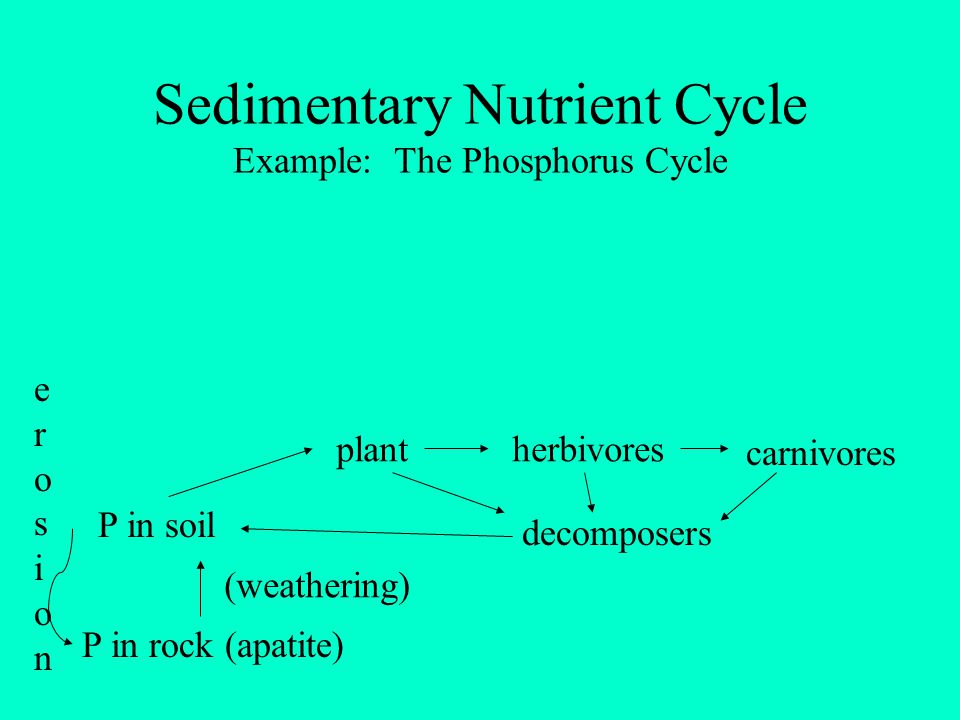 Sedimentary Nutrient Cycle Example: The Phosphorus Cycle