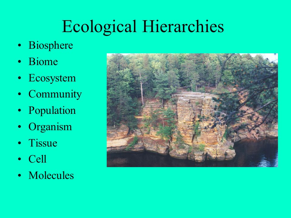 Ecological Hierarchies