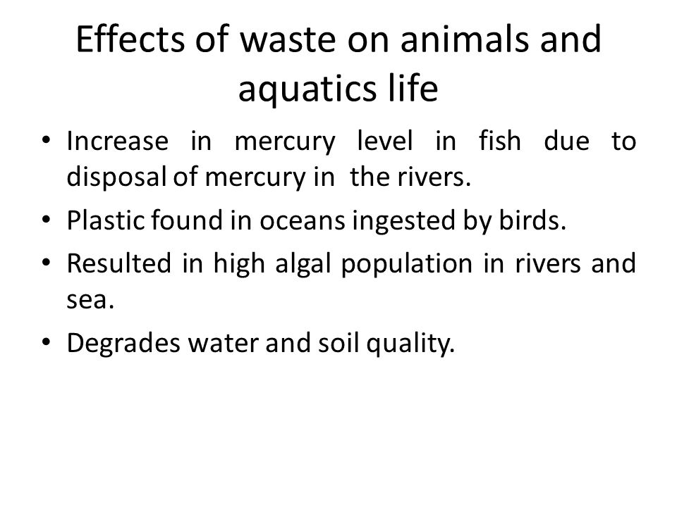 Effects of waste on animals and aquatics life