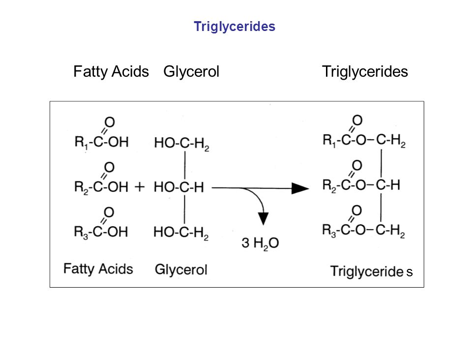 Fatty Acids Glycerol Triglycerides