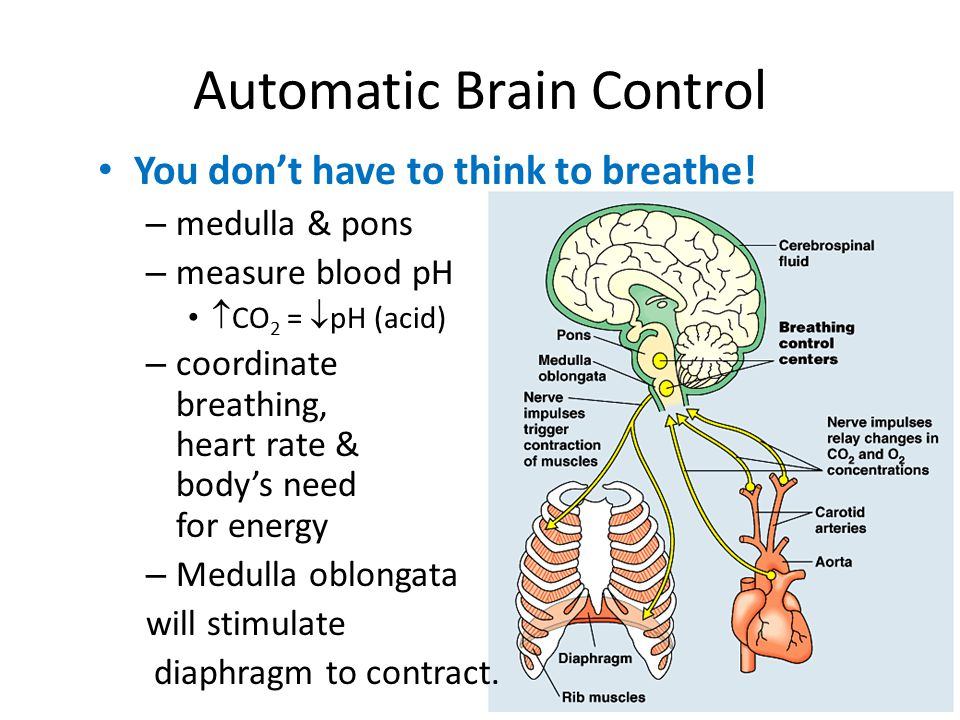 Automatic Brain Control