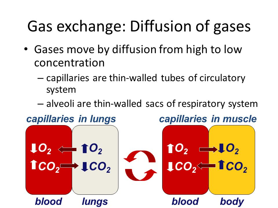 Gas exchange: Diffusion of gases