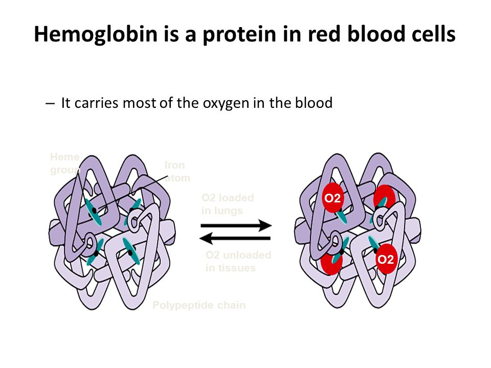 Hemoglobin is a protein in red blood cells